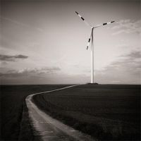Whenever the wind blows by marcschmidtmayer