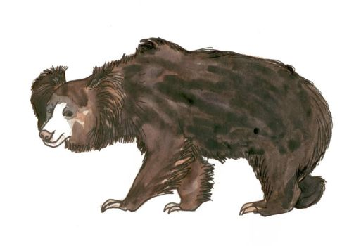 sloth bear, Stickney Bear or labiated bear by mama-Lua