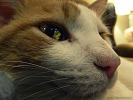 Knucklehead The Cat by Madz4ever