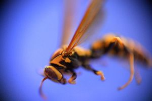 The Dead Wasp by tittel