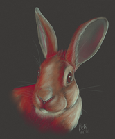 Colour Study of a Bunnieh by The-Hare