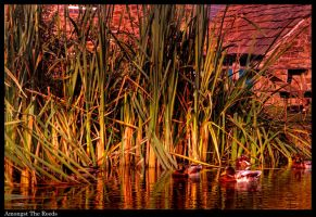 Amongst The Reeds by Megglles