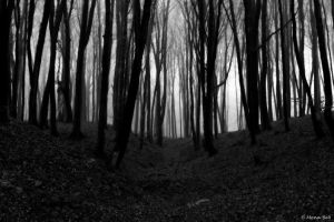 ..:lost in the woods:.. by MonaBe4