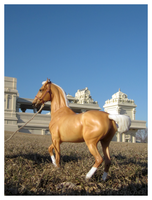 Breyer - Golden Like The Sun by The-Toy-Chest