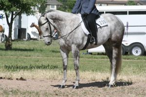 Quarter Horse Stock 63 by tragedyseen
