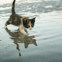 gatinho in the tide by poivre