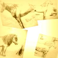 Horse Sketches by jinxii24