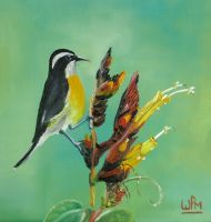 Another bananaquit by WendyMitchell