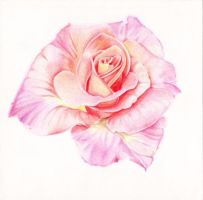 Prismacolor rose by JenieVonTeese