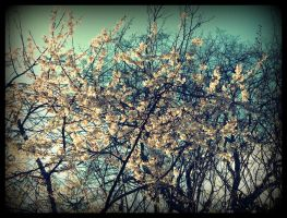 the flower tree above by x--photographygirl