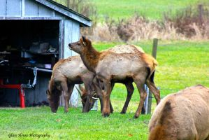 Elk County 11/2013 Part 2 by GlassHouse-1