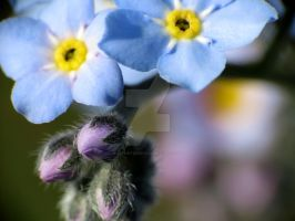 Forget-Me-Nots 6 by zaphotonista