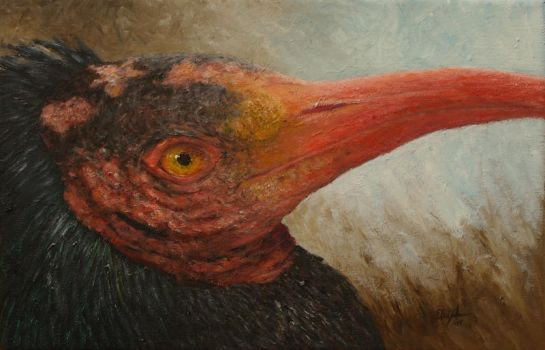 Northern bald ibis (Geronticus eremita) by InnocentMaiden