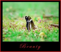 Beauty at the Center by pramudita