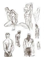 Male anatomy sketches by Muirin007