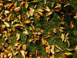 Autumn leaves by Gundhardt
