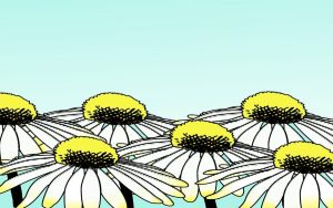 Happy Daisies - WideScreen by TheWorldIsTooSmall