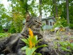 Cat sitting In My Garden by AG88