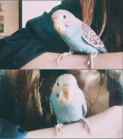 2. aww it's my little parrot.. :33 by Dincha112
