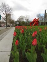 Red and Grey by Saphiroko