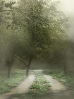 Fog backgrounds by moonchild-lj-stock