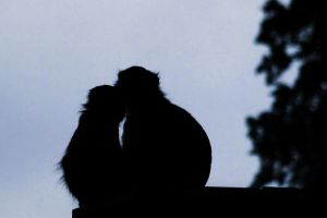 Monkey Silhouette by garethjns