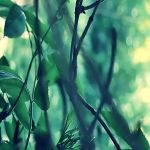simply green by sternenfern