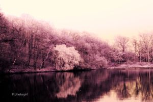 Winterscape by IRphotogirl