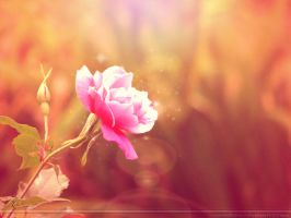 Evening Rose by Seralunai