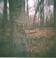 Tree Carved Love by Lomo440