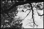 Branches by famel