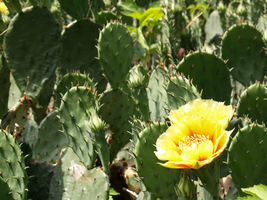 Flower in the Cactus by TRA-DA