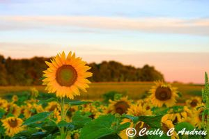 Rising With The Sun by CecilyAndreuArtwork