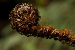 Tousled Fern by Jenni77