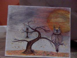 owls using pitt pens by kwpatrick