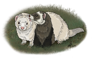 ferrets Com by modifiedMONSTER