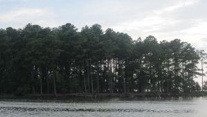 Wooded Island by kdawg7736