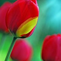 unique by augenweide