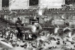 doves 2 by crato
