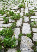 Grow in the Cracks by TokenGinger
