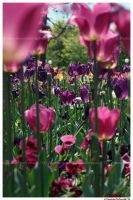 Floriade II by TVD-Photography