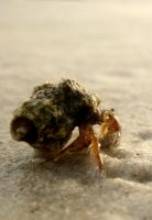Hermit Crab 2 by youngbeth