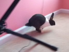Oreo the bunny by Epe0411