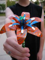 Soda Can Lily: Orange-Blue by Christine-Eige