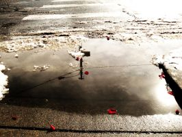 Rose Petals in Puddles by Poet-Gambit