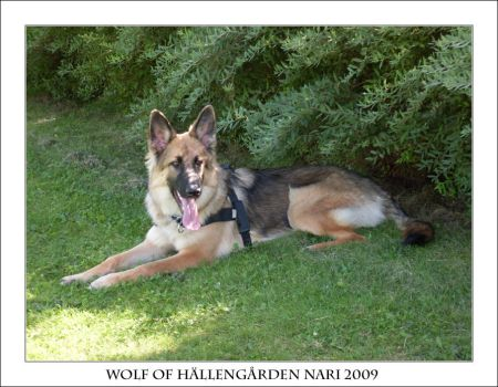 Wolf of Hallengarden Nari by malicia