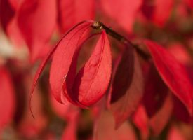 Burning Red by Navina