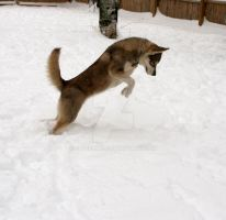 Leaping husky by sub18lime