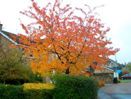 Fire Tree by ali100333