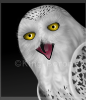 Snowy Owl Portrait by King-Boron